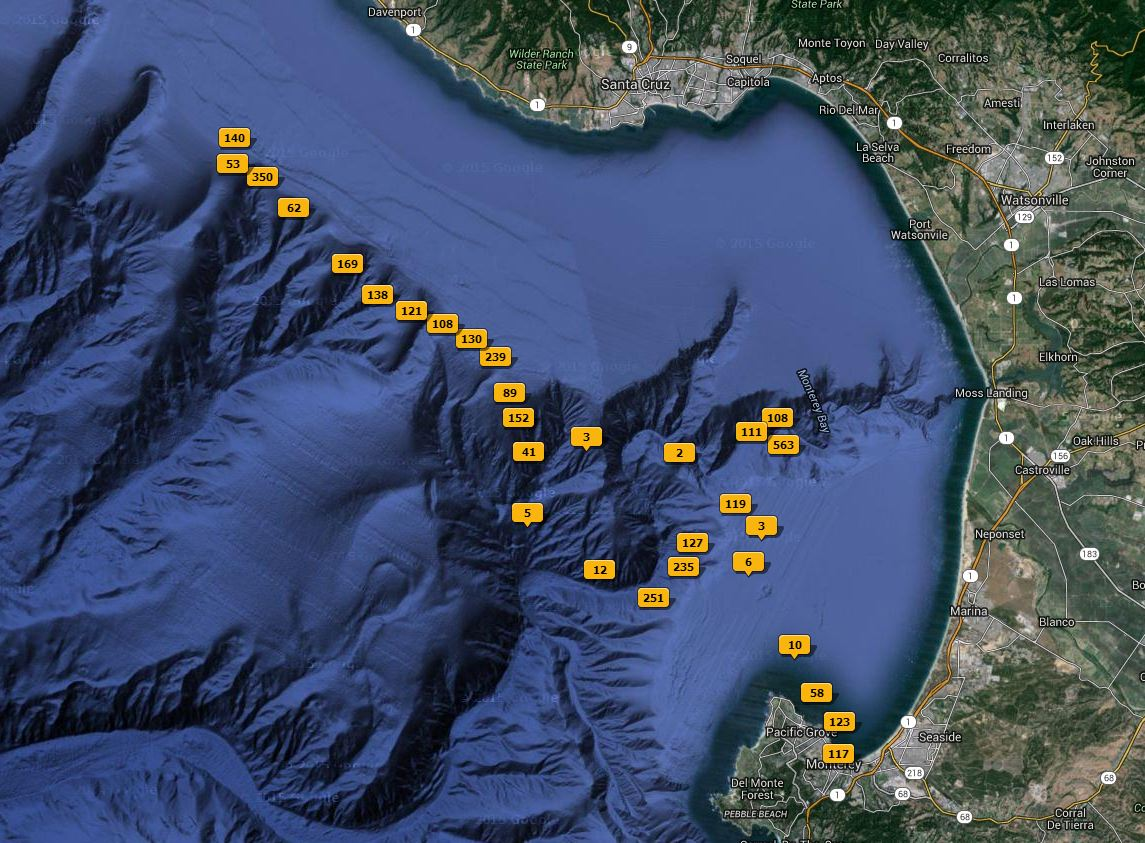 Whale Watching Route